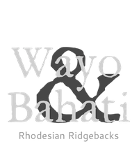 Wayo und Bahati – Rhodesian Ridgebacks
